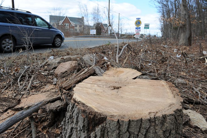 Tree-cutting took place last week on Pond Street (Rte. 126) in Ashland. The work is part of a road-revitalization project being done by the state.