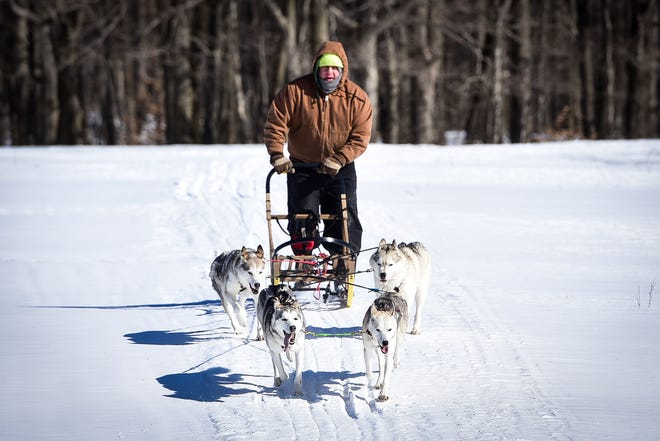 """Schuyler resident Jim Nessia and his spouse, Bonnie, frequently have to take their huskies out for runs. """"We try to get them all running and active at least every other day,"""" he said. Jim and Bonnie are hoping to get their dogs back in competition next winter after a lost season due to COVID-19."""