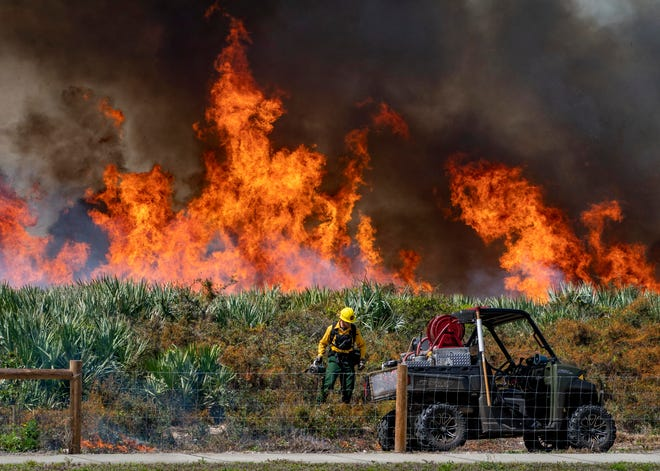 Christian Thibault, helps burn 26 acres of the Juno Dunes Natural Area with Palm Beach County Environmental Resource Management Friday in Juno Beach. The prescribed burn reduces the fire risk and helps restore the ecosystem. Half of the natural area was burned in 2018.