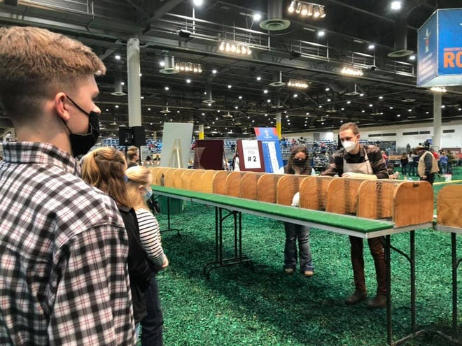 Competitors wait anxiously as the judges look over their rabbits recently at the Houston Livestock Show and Rodeo.
