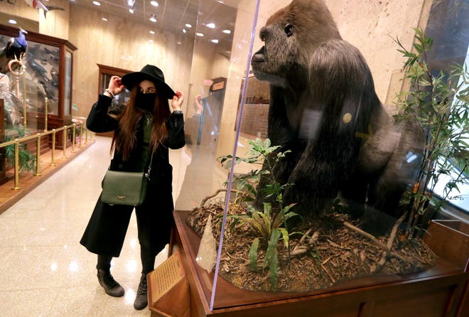 Helen Cenan of Chicago poses for a photo next to Samson the gorilla at the Milwaukee Public Museum as faciltiies opened on a limited basis in March.