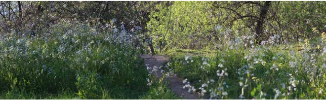 Buenaventura Trail as seen in the city of Redding's Trail Strategy in 2013.