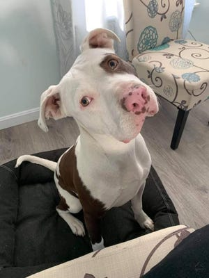 Tennessee is available for adoption now.