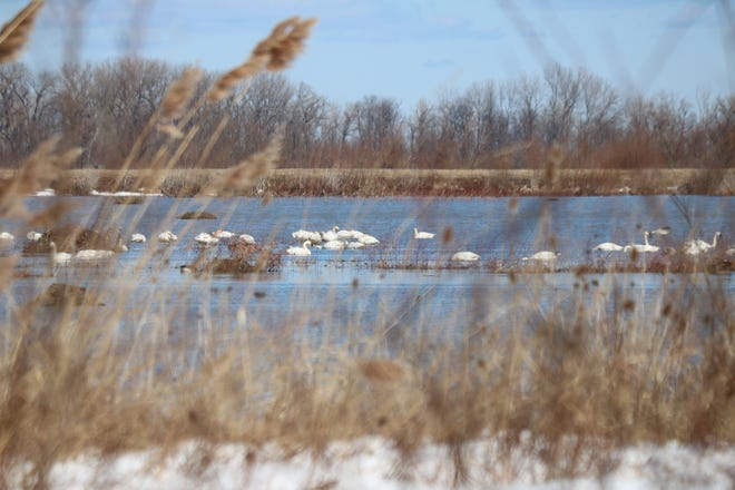 """Despite chilly temperatures, the sun was shining Saturday as dozens of bird watchers flocked to the Ottawa National Wildlife Refuge to take advantage of the """"bonus"""" opening of the seven-mile-long wildlife drive."""