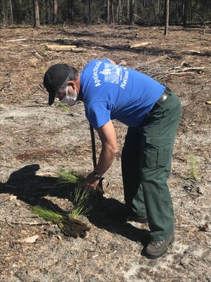 District Silviculturist Ace Haddock is leading the effort to change a seemingly barren landscape into a thriving ecosystem next to the Tallahassee International Airport.