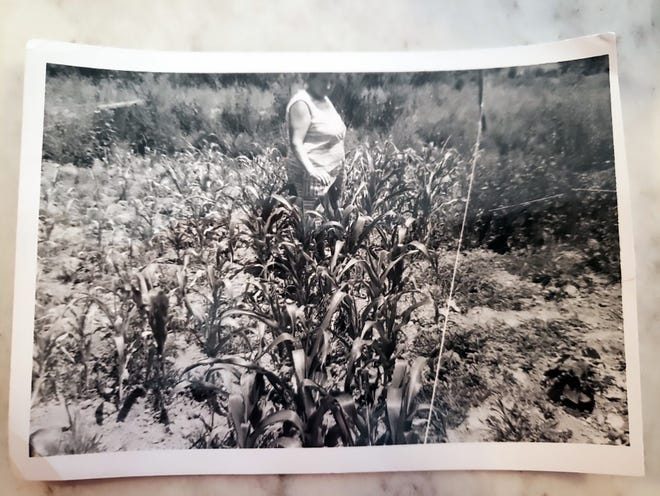 """Record Managing Editor Ashley Fontones' great-grandmother Mary """"Kitsy"""" Kostinko walks through her garden at her summer house in Hopewell Junction, New York. The garden was home to natural materials Kitsy often used to make dyes for Ukrainian Pysanka eggs."""