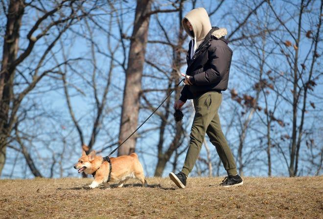 Solomon Olivier walks his Pembroke Welsh Corgi, Kayzo, 2, at Lake Park Monday.