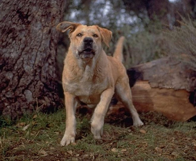 """""""Old Yeller"""" remains the most highly regarded dog movie."""