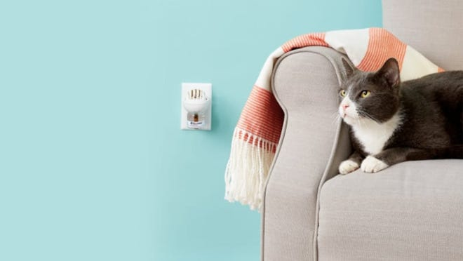 Pheromone diffusers have different effects on different cats—but if they work, they can be lifesavers.