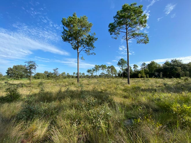The Wilson Grassland property is permanently protected by the Alachua Conservation Trust and North Florida Land Trust with funding support from the Institute for Water and Environmental Resilience's Sustainable Farming Fund, the United States Department of Agriculture's Natural Resources Conservation Service and local and state partners.