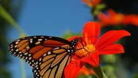 City signs up for monarch butterfly pledge