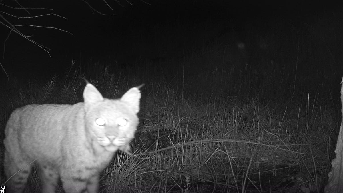 Trail cameras reveal more than 100 wildlife species along Arizona's southern borderlands