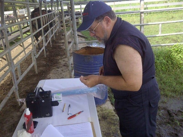 Matthew Wheeler, project leader and professor in theDepartment of Animal Sciences, says his first Girolando heifer will be producing milk in 2022, and he expects yields at least 10 times that of Gyrs in their native range.