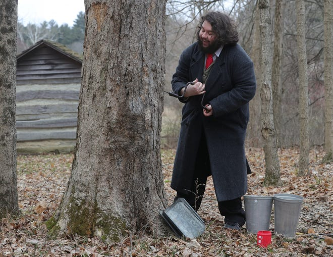 Joe Skonce, education and public programs manager at Hale Farm & Village, drills a maple tree searching for sap.