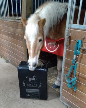 """R.J. """"inspecting"""" a bag of bedding at  GAIT Therapeutic Riding Center."""