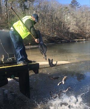 MassWildlife's John Garofoli stocks brook trout this week at Peters Pond in Sandwich.