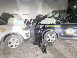 K-9 Grimm was brought in from the Cooper County Sherrif's Department during a drug bust on I-70 in Cooper County on Friday, March 9.