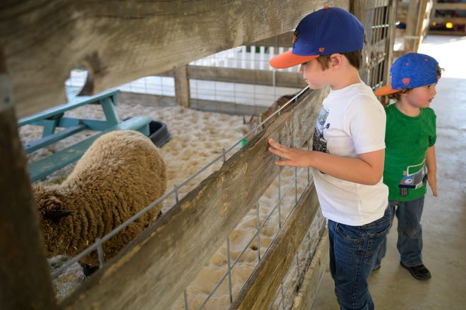 Gabriel and Samuel Knittel enjoy the petting zoo at the Lake County Fair in 2019.