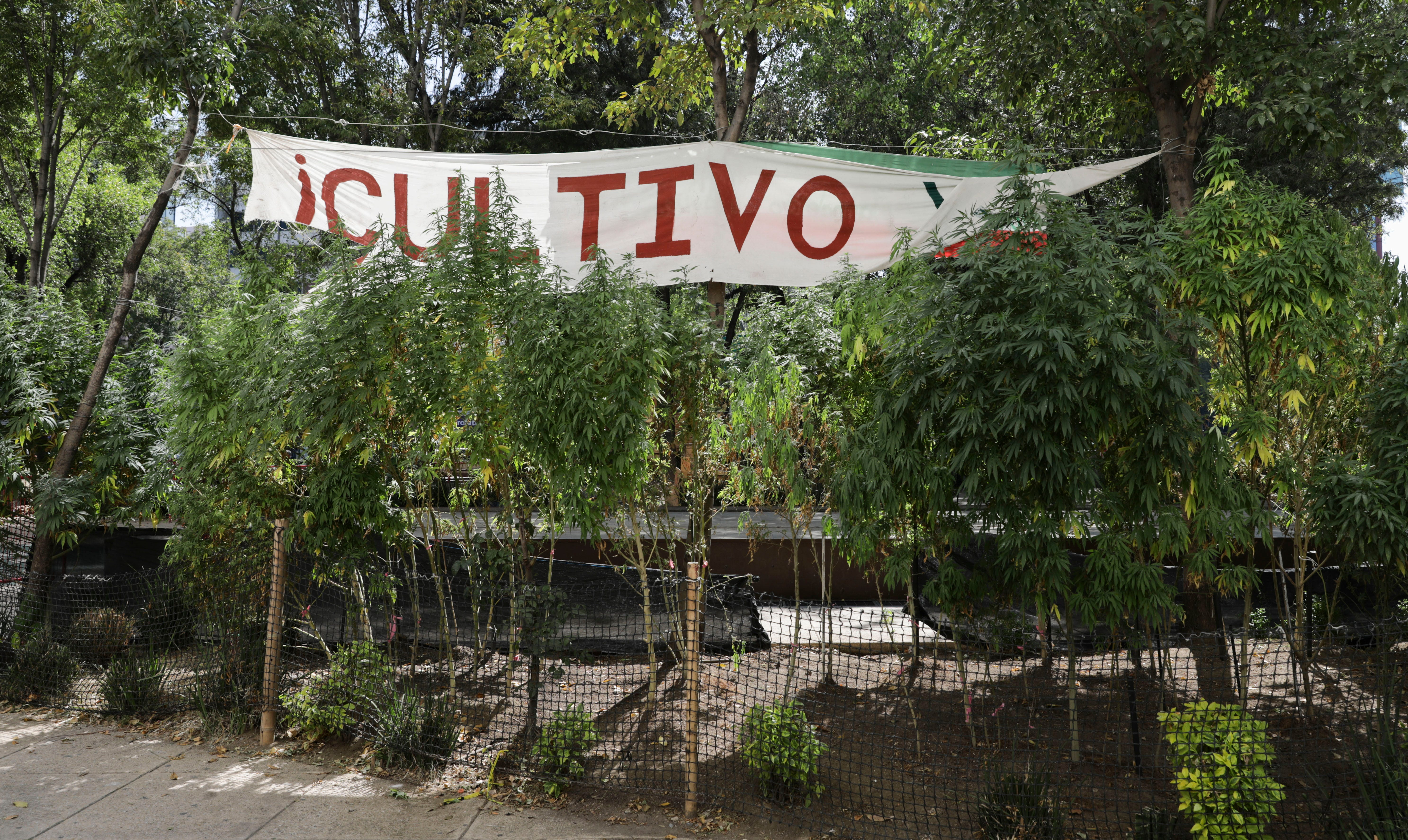 Mexican lawmakers advance bill to legalize recreational pot 2