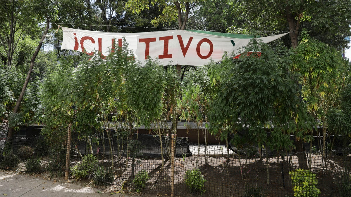 Mexican lawmakers advance bill to legalize recreational pot 3