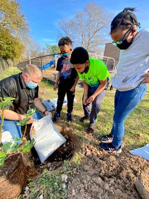 Josh Propst, executive director of the Boys and Girls Club, plants a fig tree with the assistance of club members Kaiden Camp-Byers, Noah Woods and Dariya Woods.