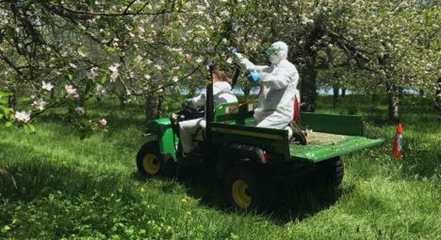Researchers applying probiotic sprays to blooming apple trees at the Connecticut Agricultural Experiment Station.