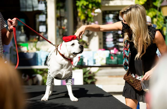April Marsland walks with her dog Augie, as he shows his stuff.