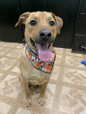 Odin is available for adoption through WARL.