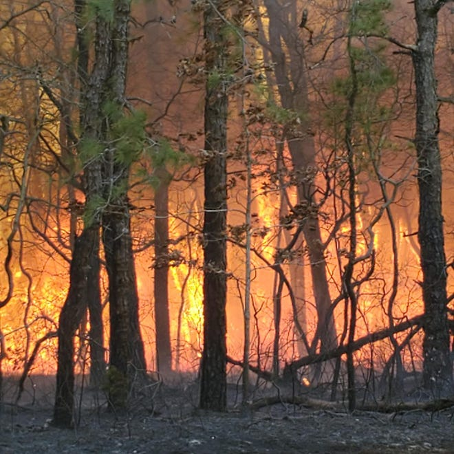 A large forest fire is burning near the Garden State Parkway in Lakewood