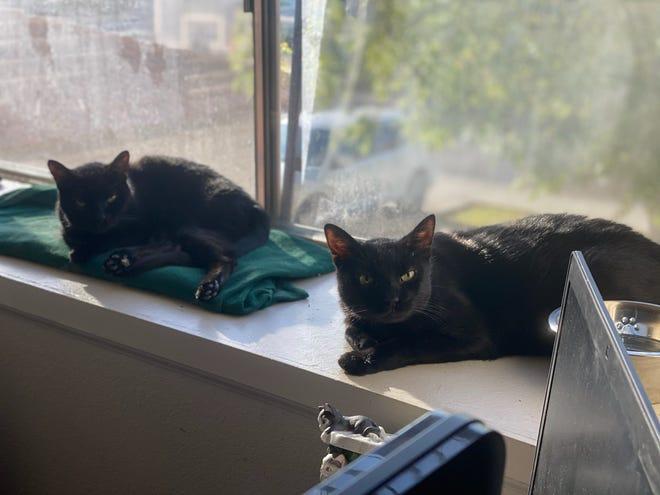 Matthew's Meisner's cats, Hunter and QT.