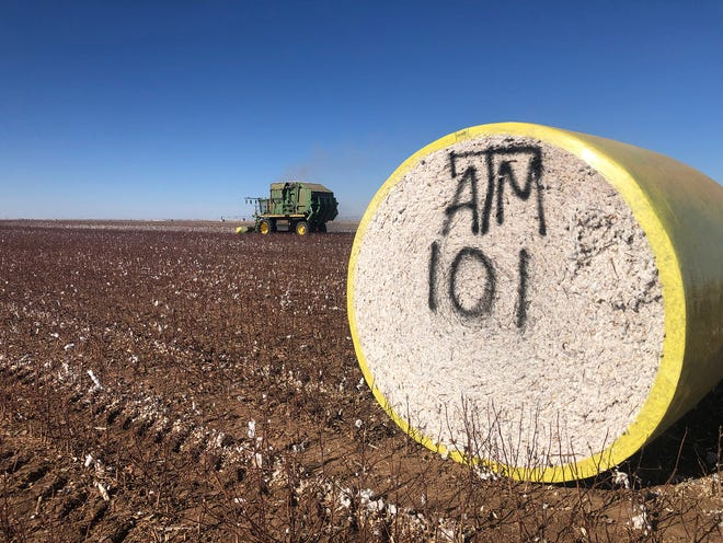 The Texas A&M AgriLife Replicated Agronomic Cotton Evaluation trial harvest in Castro County.