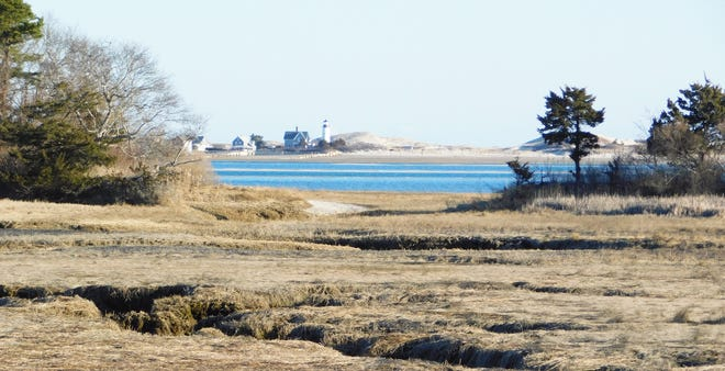 Wetlands near Long Meadow overlooking Sandy Neck Lighthouse.