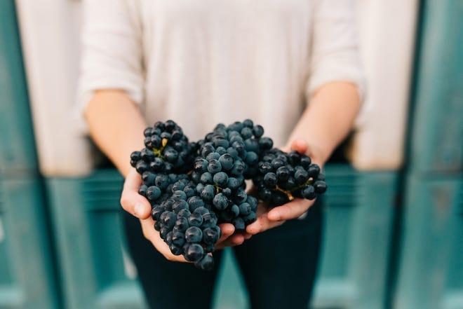 Pinot grapes, Sweet Cheeks Winery.