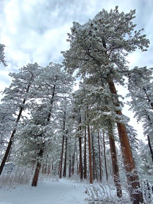 A wet spring snow provides much-needed moisture in Beulah's Pueblo Mountain Park