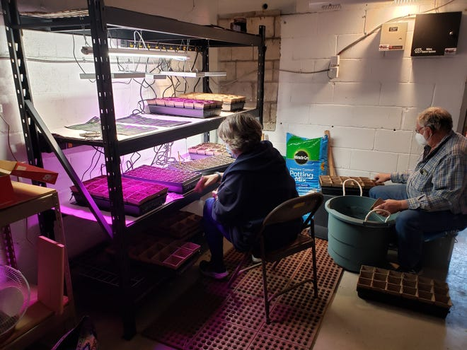 Master gardener Brenda Hoffman and her husband, Carroll, germinate seeds March 10 in a former stained-glass workshop that has been repurposed to a grow room at the Gahanna Sanctuary, 82 N. High St.