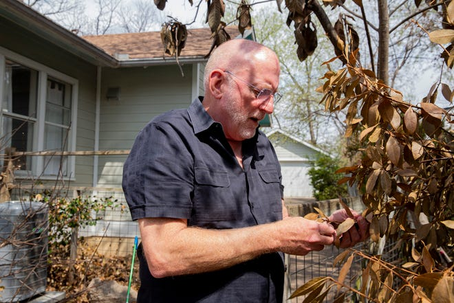 Michael Barnes holds a dead leaf from a kitchen bay tree at his house in the Bouldin neighborhood.