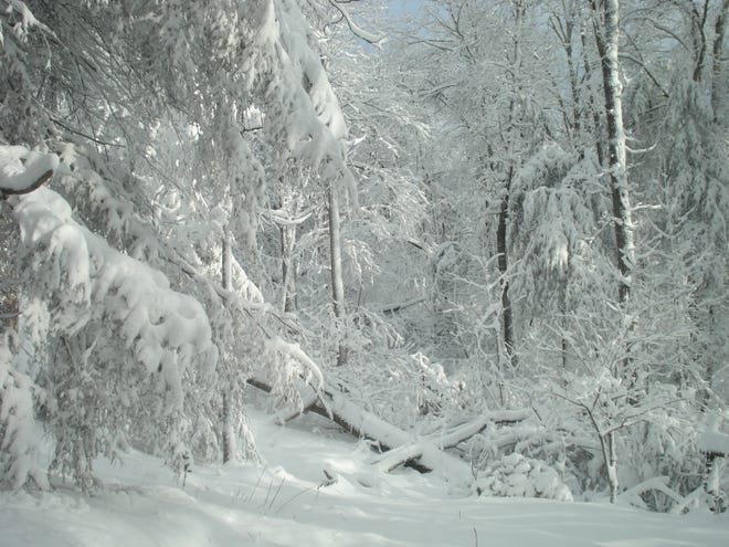 March snows in the isolated Bear Mountain forest have always been beautiful. This one was possibly 10 inches on March 1 and 2, 2009. It certainly brings to mind the advantages of modern conveniences that were not available to Granny during the 22-inch snow of March 2, 1942.
