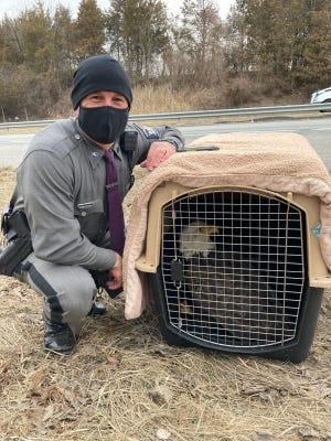 New York State Trooper Bryan Whalen saved an injured bald eagle from the side of State Route 17 in Blooming Grove, Orange County.