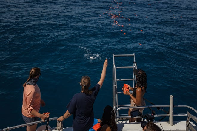 Left to right: Palm Beach Atlantic University student Abigail Phillpot; Associate Professor of Earth Science and Oceanography Linda Sedlacek; and students Isabelle Arjona and hawntalay Gardiner watch research equipment drift northward in the Atlantic Ocean off West Palm Beach on Monday.