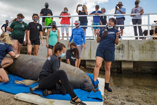 Miami Seaquarium veterinarian Dr. Magdalena Rodriguez, right, Miami, talks with spectators during a manatee release into the Earman River at the Anchorage Park boat ramp in North Palm Beach, Fla., on Tuesday, March 16, 2021. The mature female manatee was given the name Reindeer and was rehabilitated at the Miami marine attraction since her arrival in December.