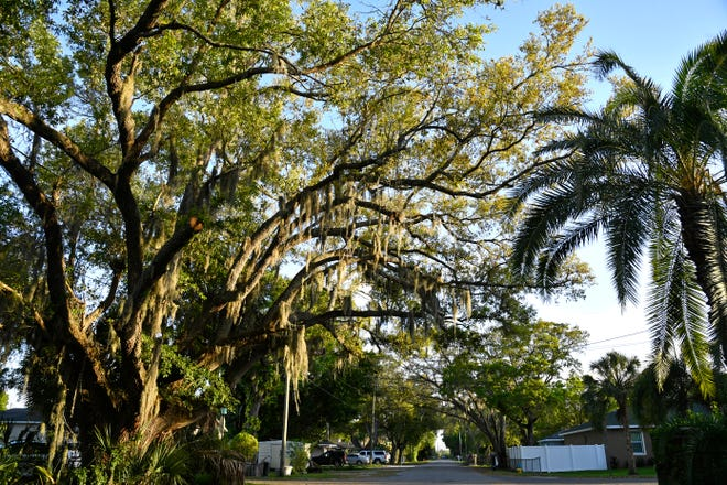 Located in East Bradenton, the neighborhood of Samoset was originally part of a larger, independent town of the same name incorporated in September of 1926.