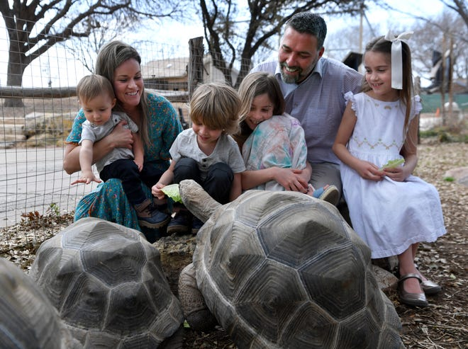 Bellamy Pottebaum, 4, takes his turn feeding one of the Abilene Zoo's Aldabra Tortoises on Tuesday. Bellamy's father is Jesse Pottebaum, the zoo director, top. At far left is his wife, Sara, holding their 18-month-old son Brody; then Bristol, 9, and Baye, 7.