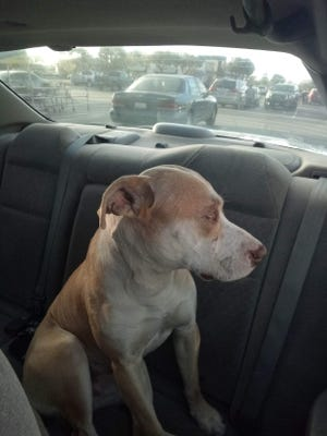 Kaine, who was lost for several days after an accident, has since been reunited with his owner.