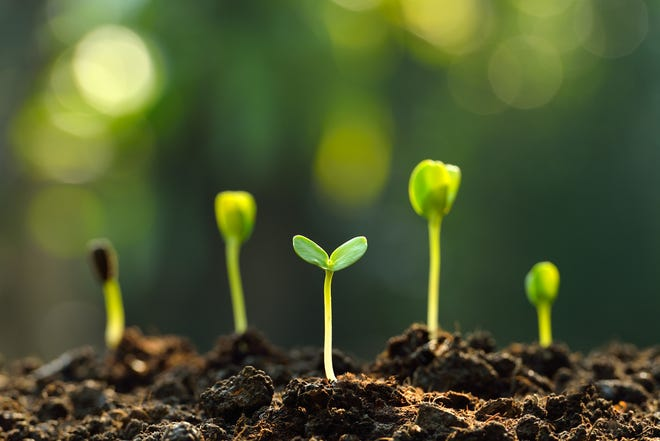 Local gardeners can have their soil tested as they prepare for spring planting.