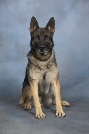 A memorial service was held Monday to remember the great service Deputy K-9 Jango provided to the citizens of New Hanover and his handler, Sgt. Stegall.