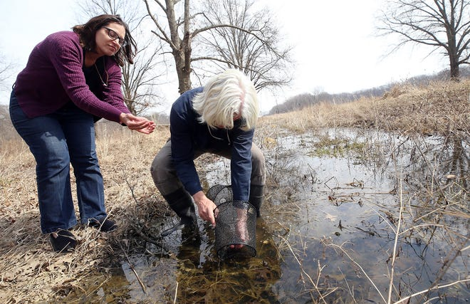 Tammy Miller and David Hague examine a salamander trap in one of the vernal pools on their Coyote Run property in Pickerington on March 10. Hague was doing an informal study of the mole salamanders.