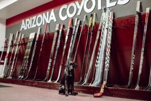 Luna often would visit the Coyotes' offices a few times a week, stopping in at the locker room and sometimes stepping out on the ice, too.