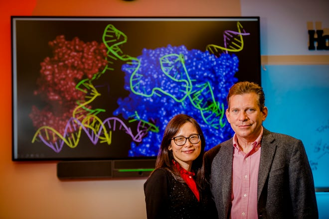 Dr. Xiaochun Long, left, and Dr. Joseph Miano pose at Medical College of Georgia with an illustration of molecular scissors, in red and blue, cutting and repairing DNA to address specific mutations.