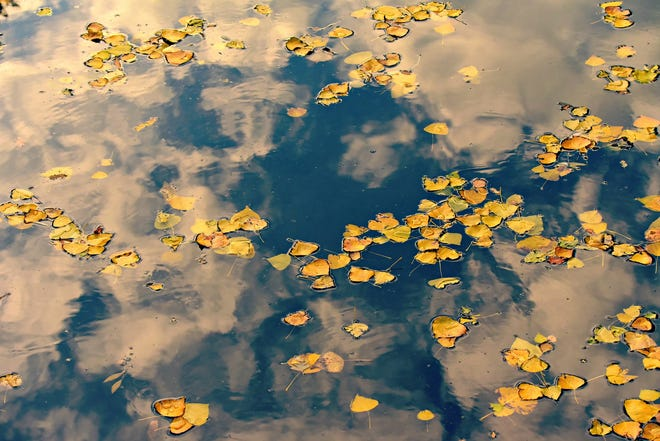 Ameren warns property owners not to dump leaves into lake.