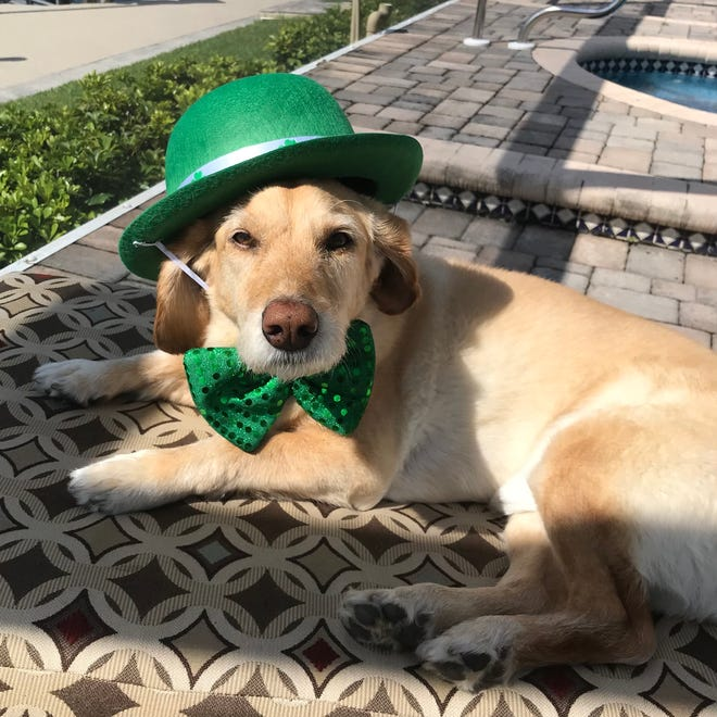 Reilly Barry enjoys the sun on St. Patrick's Day on Limewoods Drive in Saugus.